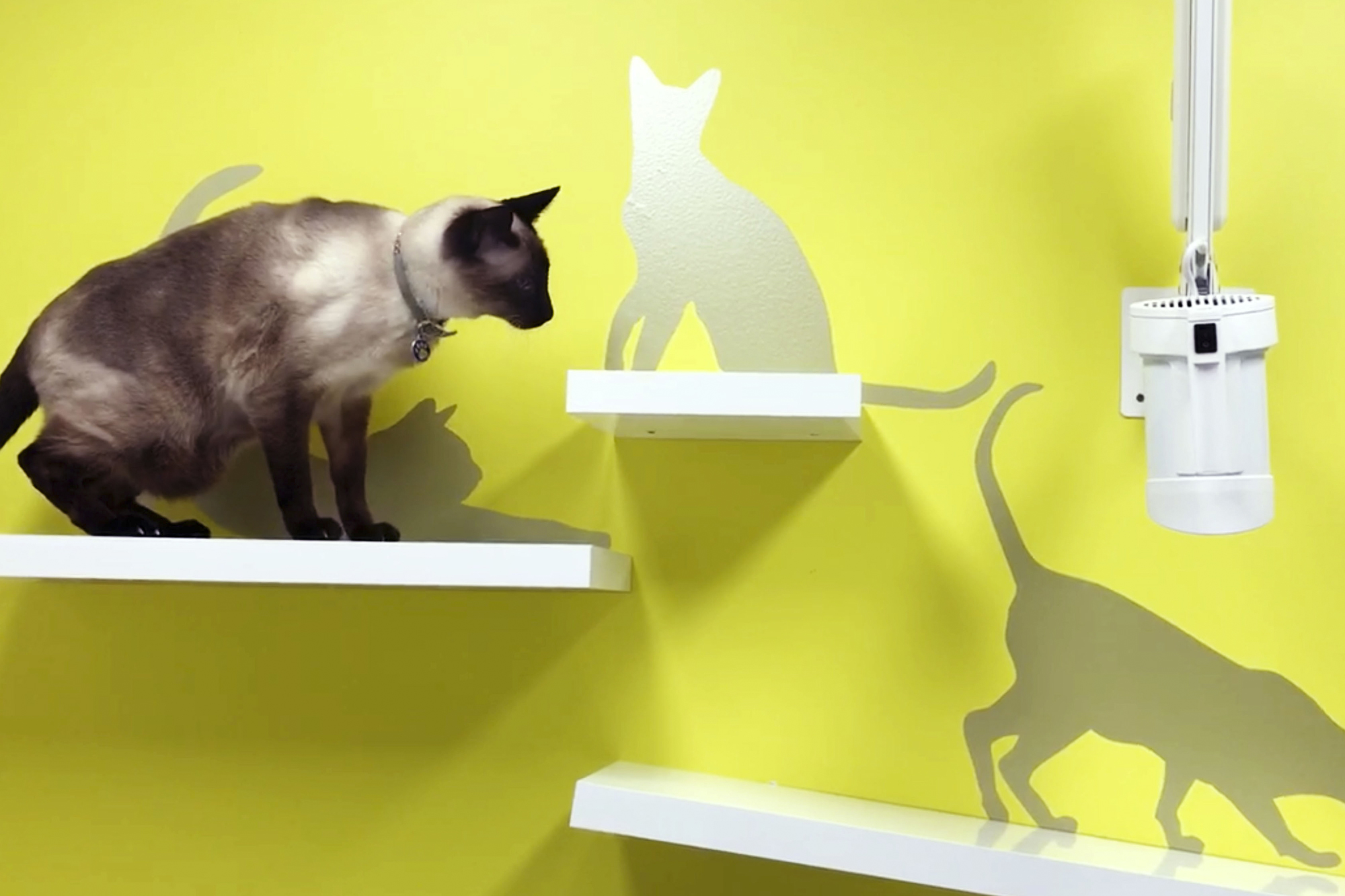 Cat Friendly Consult Room at BVSC + The Specialist Clinic